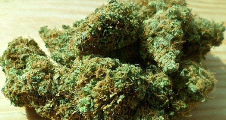 Canadian weed, marijuana