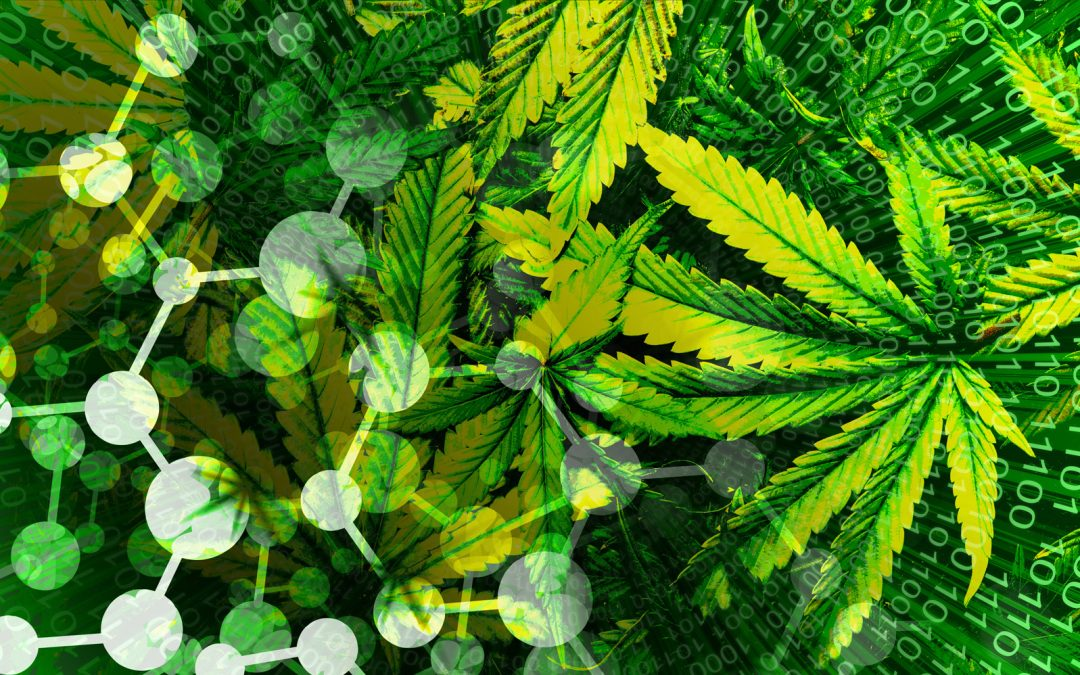 BLOCKCHAIN TO THE RESCUE! Legalized Cannabis Meets Digital Ledger Technology in a Breakthrough Development