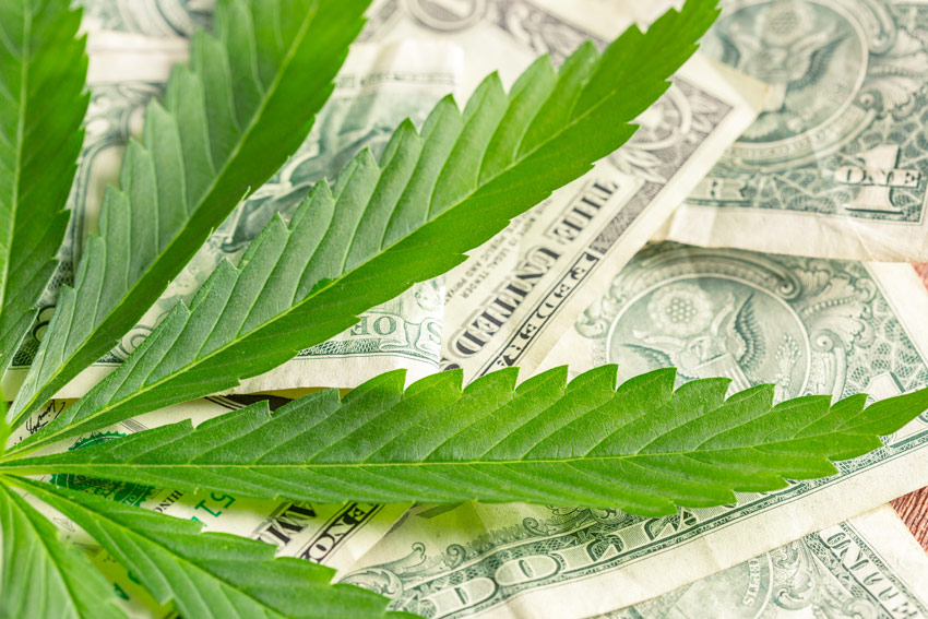 Can You Make a Fortune in the Legal Cannabis Market? The Answer is ABSOLUTELY YES!