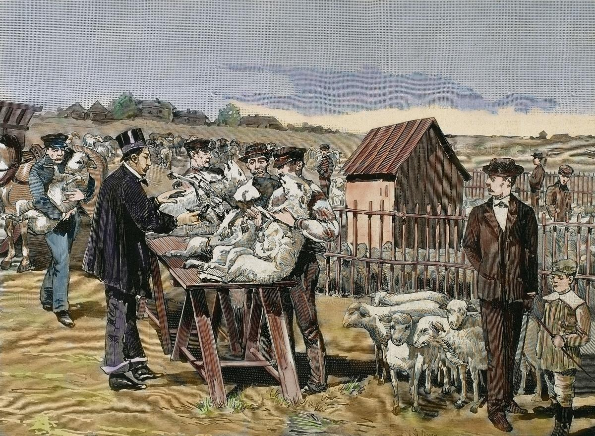 Dr. Louis Pasteur Innoculating Sheep Against Anthrax
