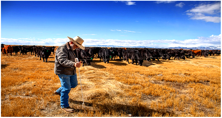 A Drought Tipping Point and the Price of Beef